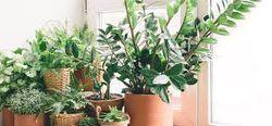 Mettez des plantes chez vous !